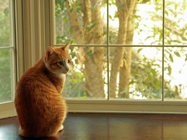 窓の外を眺める猫は、何を考えているの?