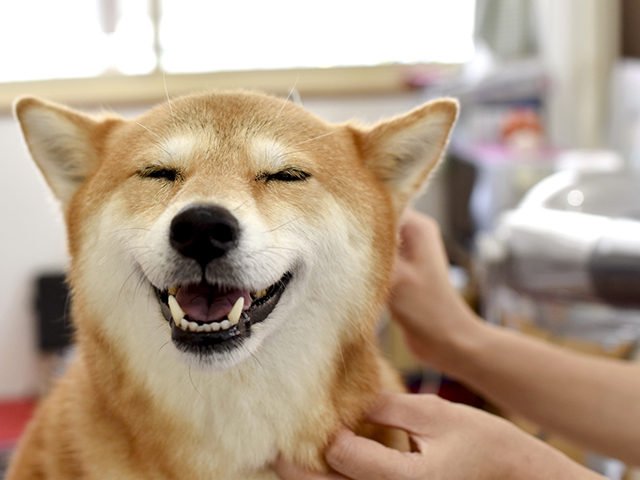 犬のニオイが気になる!口臭と排泄物臭の対策!